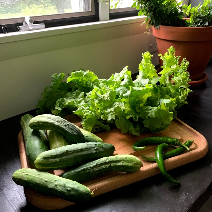 Two Ways Our Garden Helps Us Reduce Waste