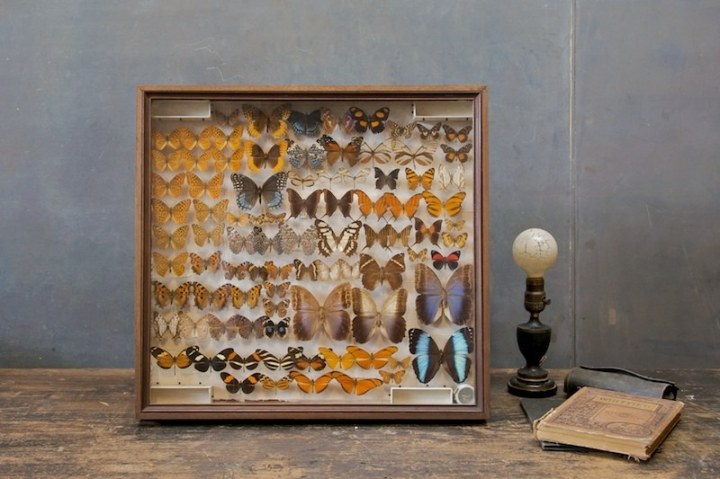 1296_1296_1981vintage-museum-butterfly-taxidermy-display5